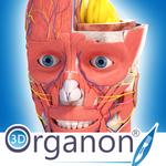 3D Organon Anatomy icon