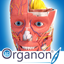 3D Organon Anatomy icon