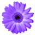 Artweaver icon