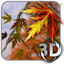 Autumn Leaves in HD Gyro 3D icon