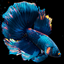 Betta Fish Live Wallpaper icon