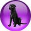 Black Lab NetOS icon