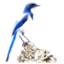 BLUEJAY icon