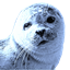 Blueseal Dictionary icon