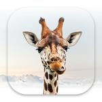 Girafi icon