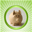 Homemoney icon