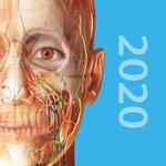 Human Anatomy Atlas Icon