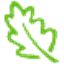 Leaf Networks Icon