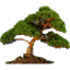 Natara Bonsai icon