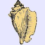 the xonsh shell icon