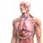 Zygote body icon