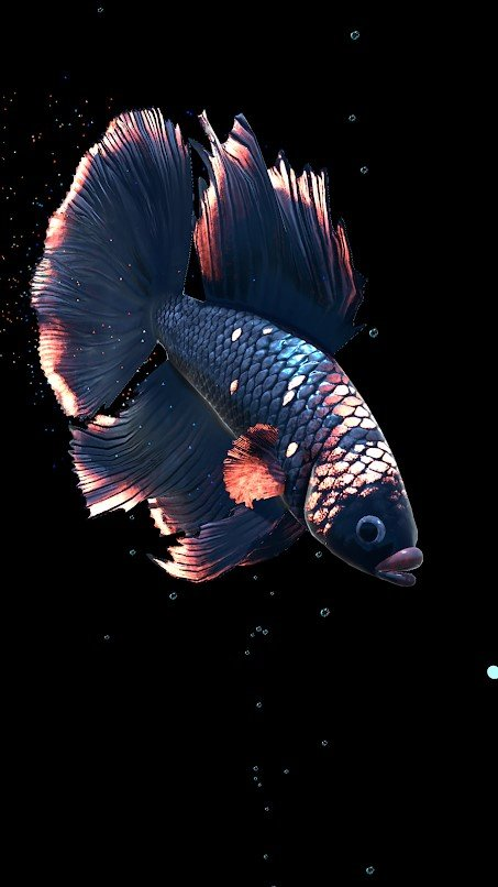 Betta Fish Live Wallpaper Alternatives And Similar Apps